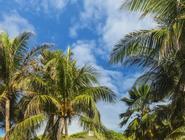 Decameron San Luis - All Inclusive